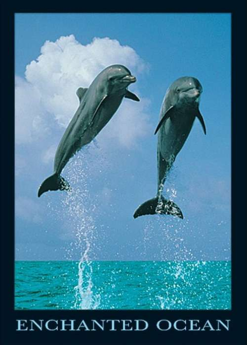 Dolphins - P185