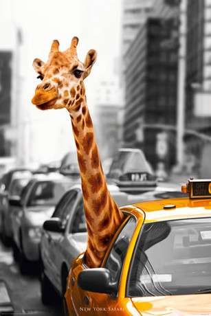 NEW YORK safari
