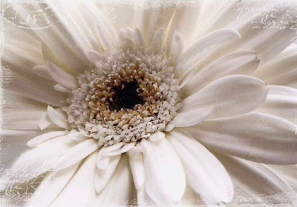 White Flower - P297