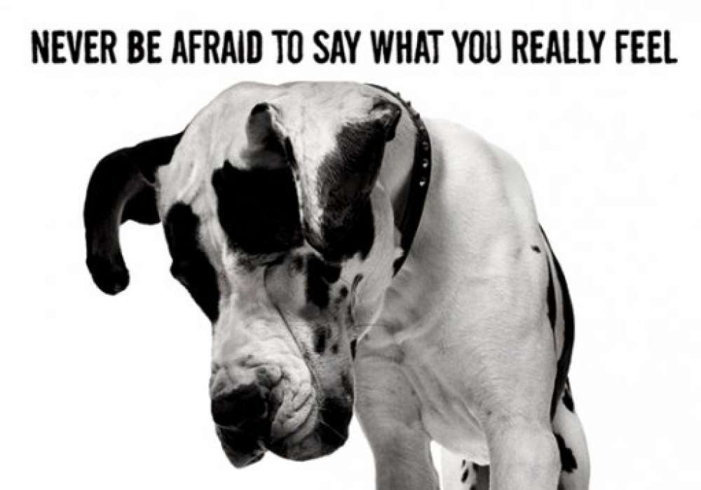 Never Be Afraid To Say