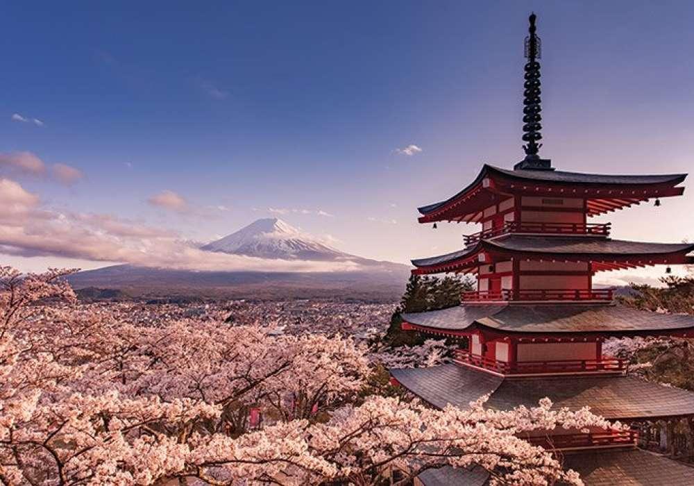 Mount Fuji Blossom - P367