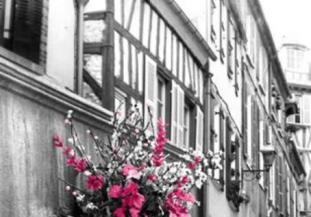 PINK FLOWERS - P248