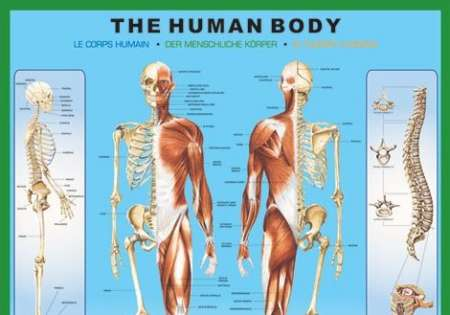 THE HUMAN BODY - P86