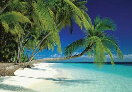 Maldives Beach - P334