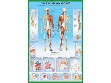 THE HUMAN BODY - P86
