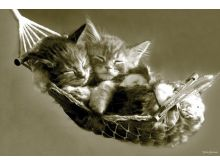 KEITH KIMBERLIN (KITTENS IN A HAMMOCK) -P188