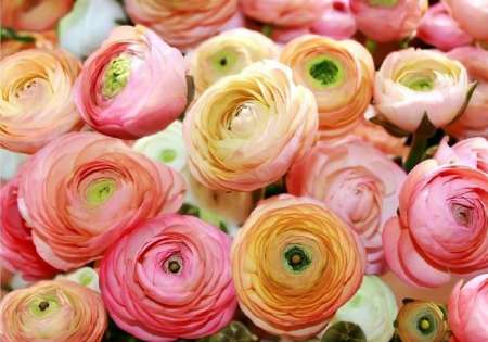 Beautiful Roses - For Wall