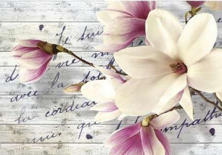 Magnolia Flower - For Wall