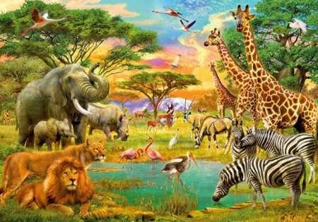 African Animals - W+G