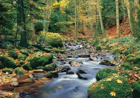Forest Stream - W+G