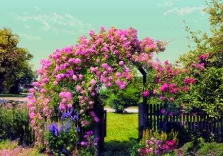 Garden - Komar
