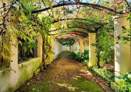 Garden Pergola - For Wall