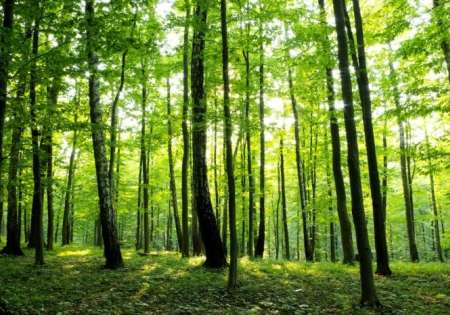 Greeny Forest - For Wall