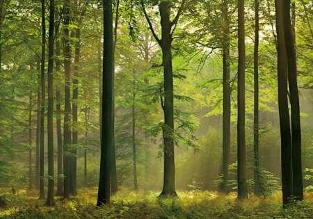 Autumn Forest - W+G